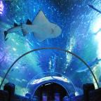 Middlewich Guardian: Walk through the underwater tunnel at Sea Life